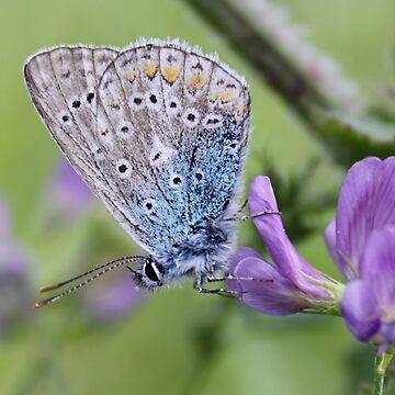 Mister Blue Loves Purple by Jokus