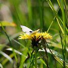 Butterflion by dougie1