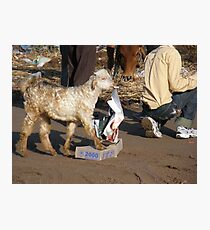 Hungry Goat Photographic Print