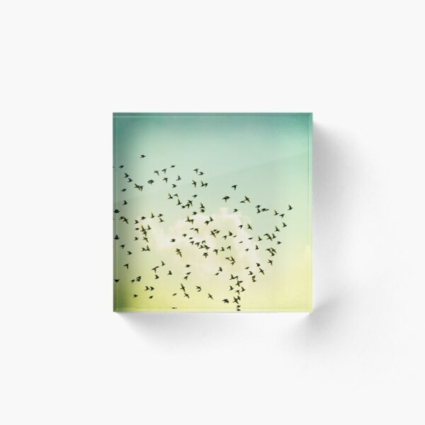 Birds Flying Photography, Birds Fly Sky, Mint Turquoise Yellow Acrylic Block