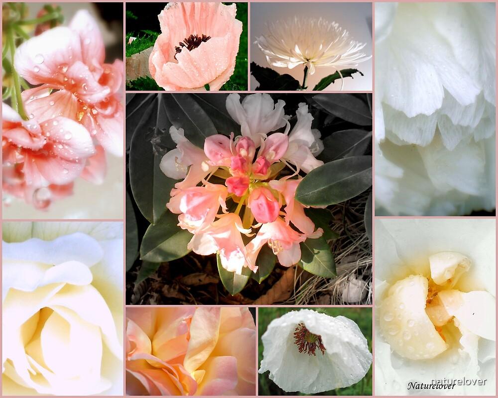 Softness - Collage Of Garden Flowers. (308) by naturelover