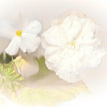 White begonias by missmoneypenny