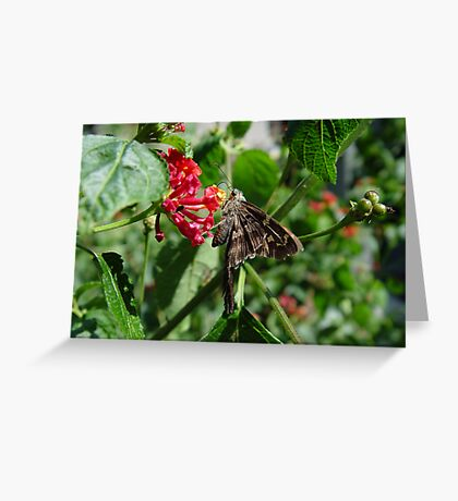 Long-tailed blue skipper Greeting Card