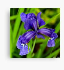 The Iris ! Canvas Print