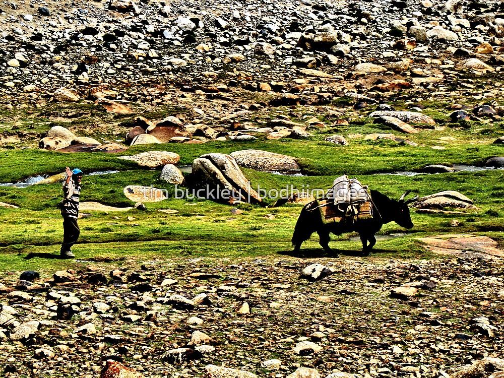 passing. herdsman, ladakh by tim buckley | bodhiimages