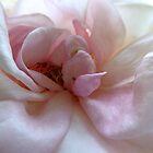PINK ROSE by Elaine Bawden