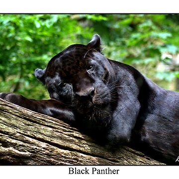 Black Panther by protector