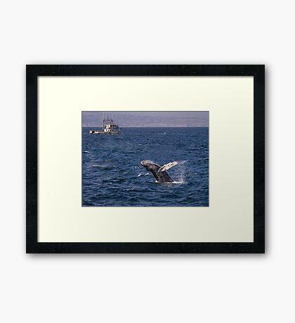 Durchbrechen des Buckelwals Gerahmtes Wandbild