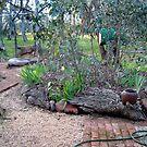 My front Garden by Philip Mitchell Graham