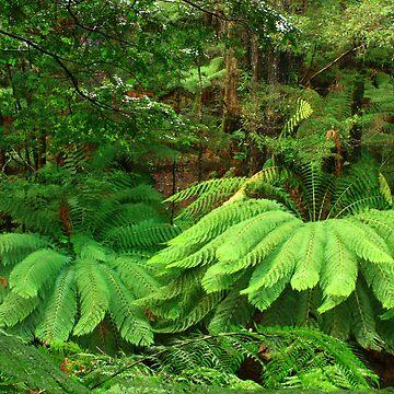 ....fern nest by phillip24