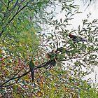 Birdsville by Harry Oldmeadow