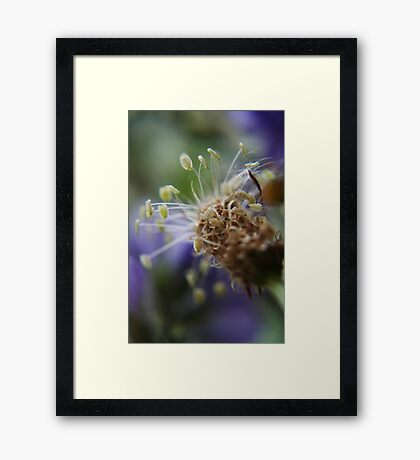 Little dancers  (from wild flowers collection) Framed Print