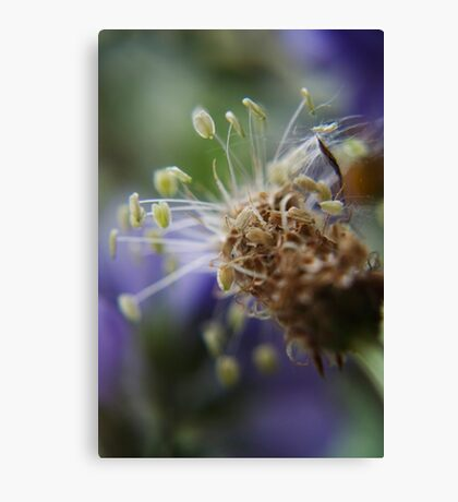 Little dancers  (from wild flowers collection) Canvas Print