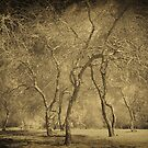 Trees in WInter by Faye White