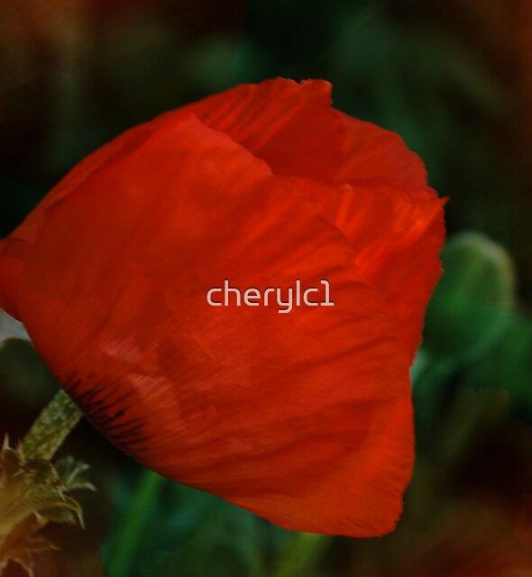 Poppy by cherylc1