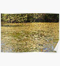 Beautiful Pond Poster