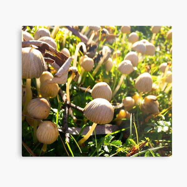 Mushroom Village - No filter Metal Print