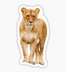 Lion Shirt/Lion Apparel/Lion Accessories-Do you like the king lion? Sticker