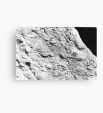 Brachiopod fossils from Usk, Monmouthshire Canvas Print