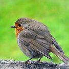 Der schüchterne Robin von trish725