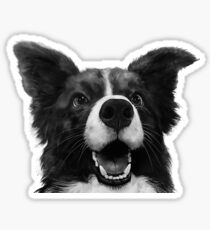 Who's a good boy? Glossy Sticker
