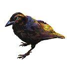Raven by crumpet
