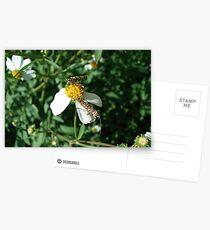 Ailanthus Web Moth Postcards