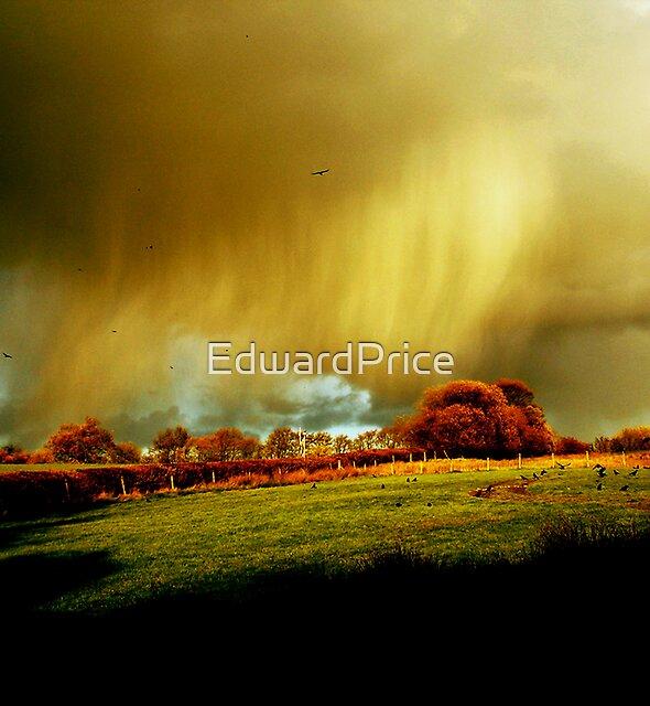 Stormy Weatherbirds by EdwardPrice