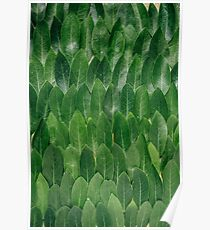 Abstract Art Green Plant Leaves- Leaf Art  Poster