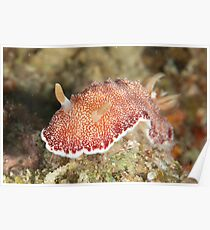 Red-spotted Nudibranch Poster
