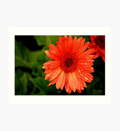 Big Orange Flower Art Print