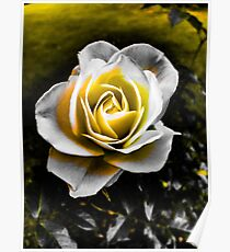 Glowing Gold Rose Poster