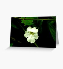 Mysterious Pale Blossom Greeting Card