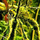 Moss Invasion! by JACONNI