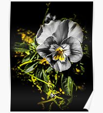 Black and Yellow Blooming Flower Poster