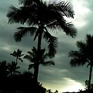 Gloomy Day At the Tropics by JACONNI