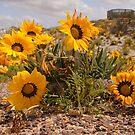 Australian Wild Flowers #2 by Paul Gilbert