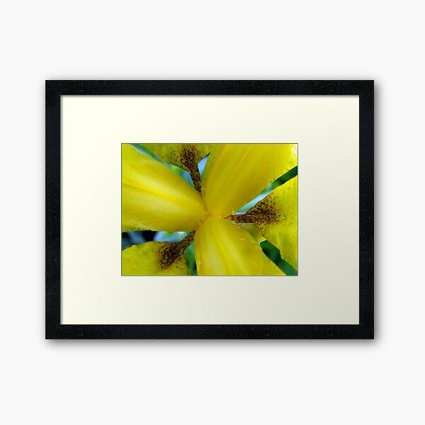 Inside a Yellow Iris Framed Art Print