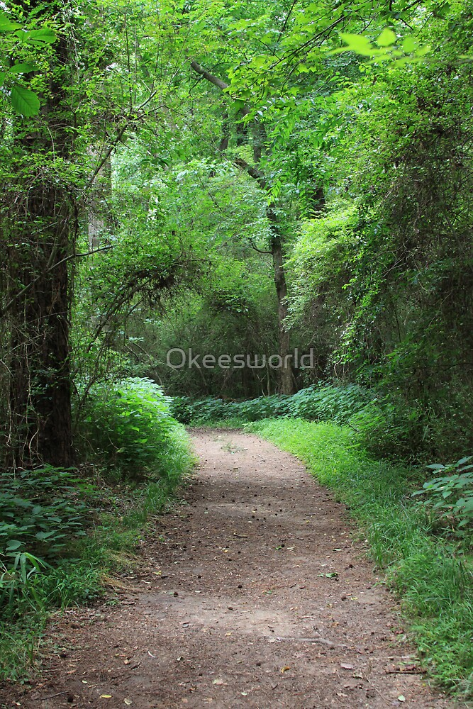 The Enchanted Path by Okeesworld