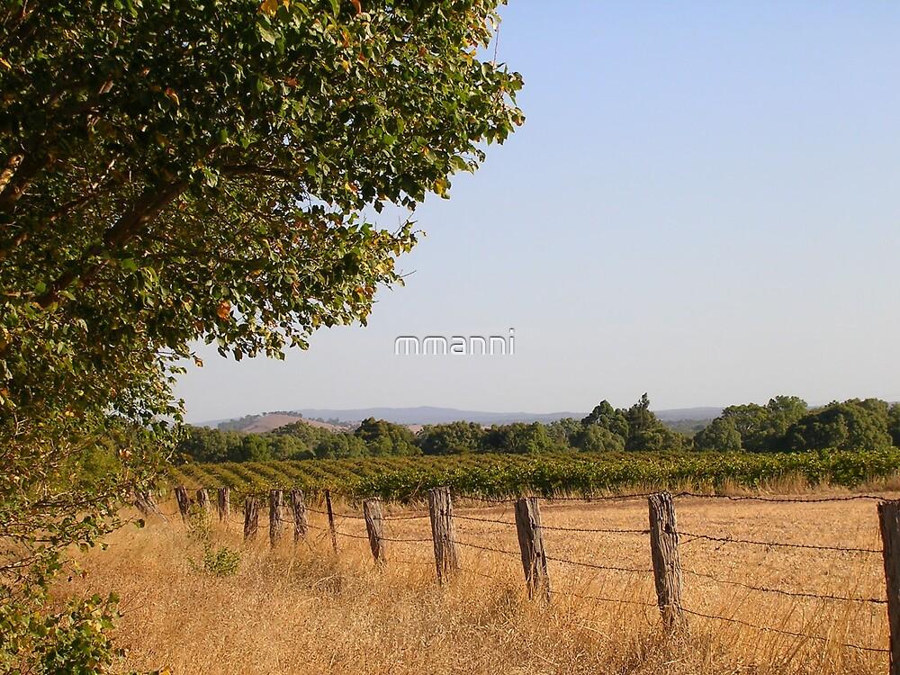 Vineyard by mmanni