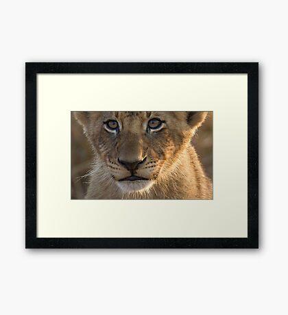 Sparta Lion Cub Framed Print