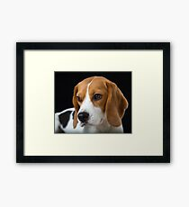 Beagle on the Black Framed Print