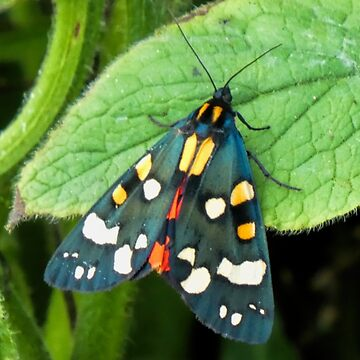 Tiger Moth.........Lyme Regis. Dorset UK by lynn45
