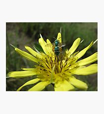 Green Bug on Yellow Flower Photographic Print