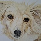 Long-haired Chihuahua by Anita Putman
