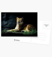 Lioness Postcards