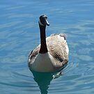 Canada Goose by SunriseRose