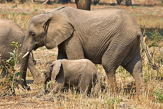 Mother and Child by Mike Freedman