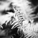about the fern by Markus Mayer