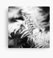 about the fern Canvas Print